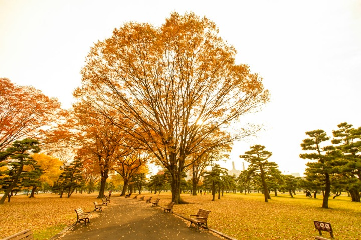 imperial_palace_park_autumn_colors_6659