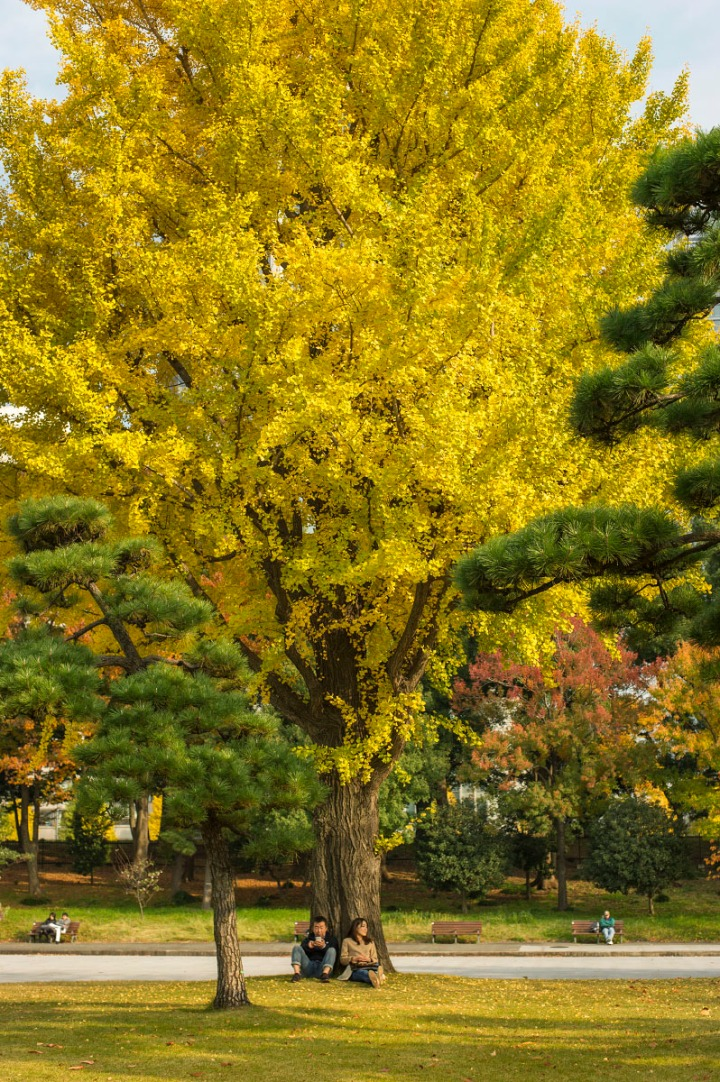 imperial_palace_park_autumn_colors_6678