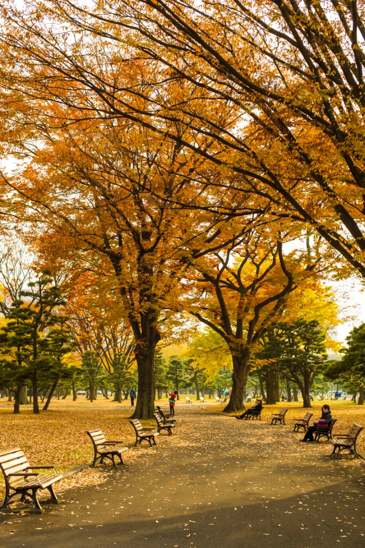 imperialpalace_autumn_leaves_6665