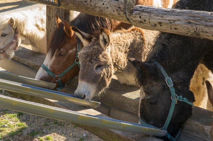 tochigi_donkeys_1653