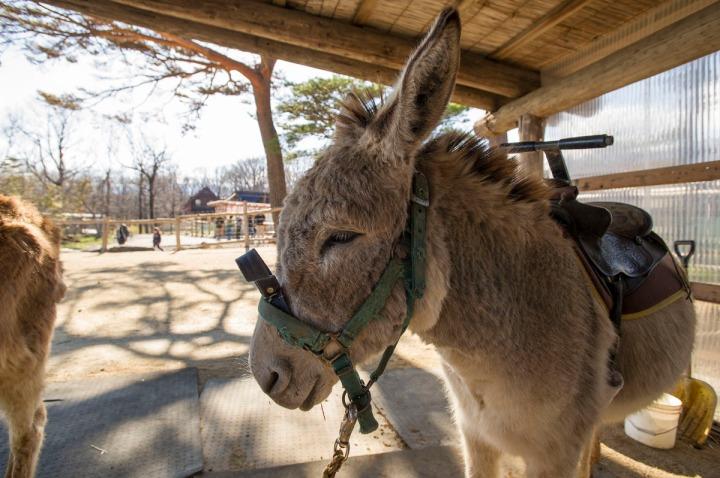 tochigi_donkeys_1662