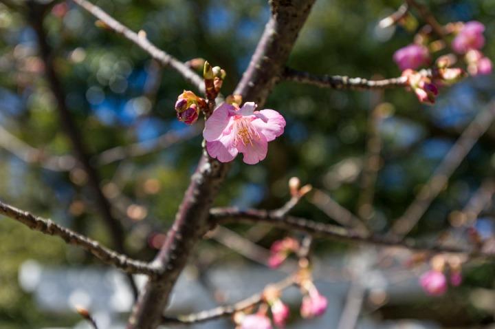 kamakura_goryo_shrine_3831