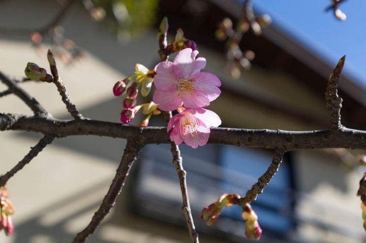 kamakura_goryo_shrine_kawazu_3889