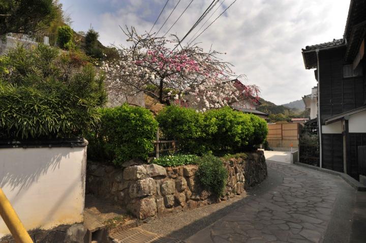 shizuoka_izu_0597