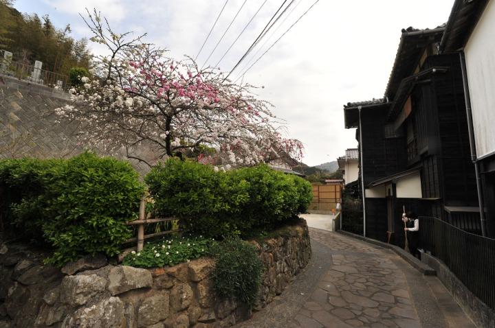 shizuoka_izu_0643