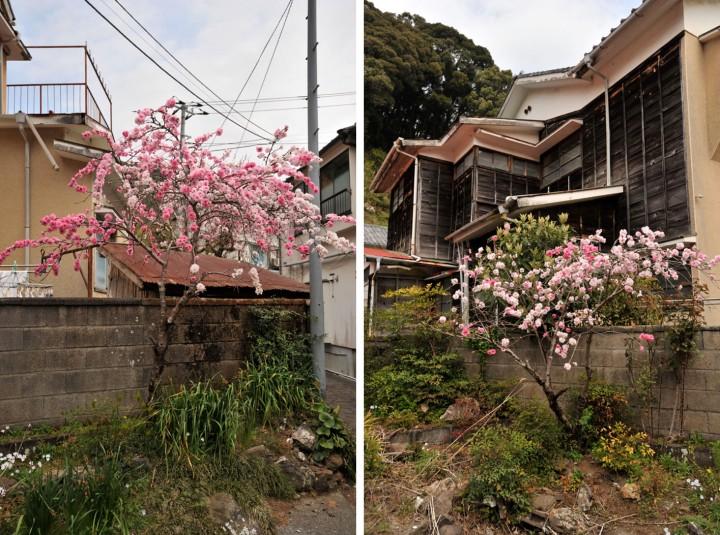 shizuoka_izu_0690