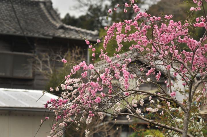 shizuoka_izu_0727