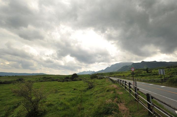 kumamoto_cows_8118
