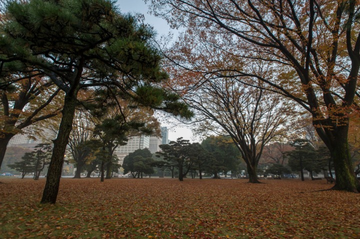 imperial_palace_fog_7204