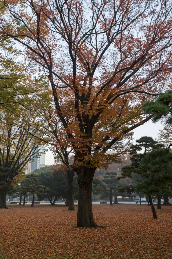 imperial_palace_fog_7214