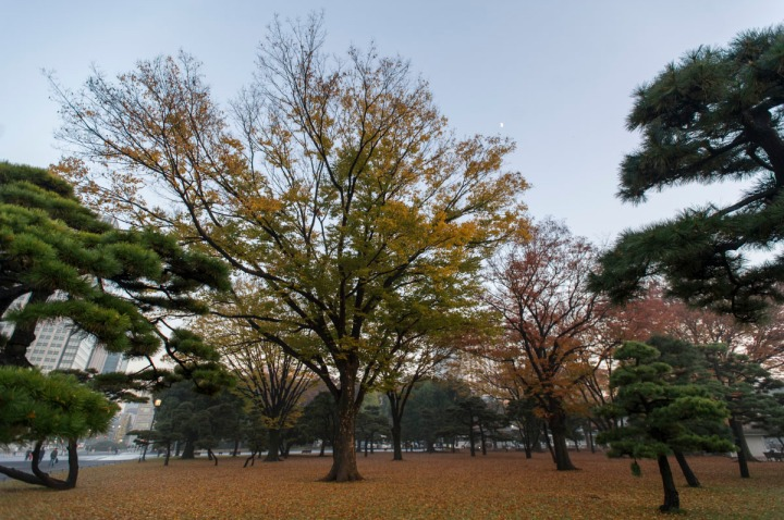imperial_palace_fog_7227