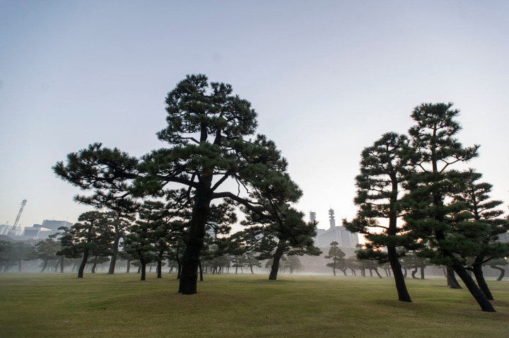 imperial_palace_fog_7251